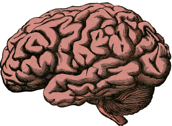 brain of brian